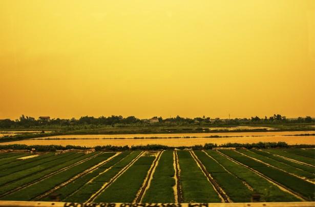 rice-field-1372145419P1F